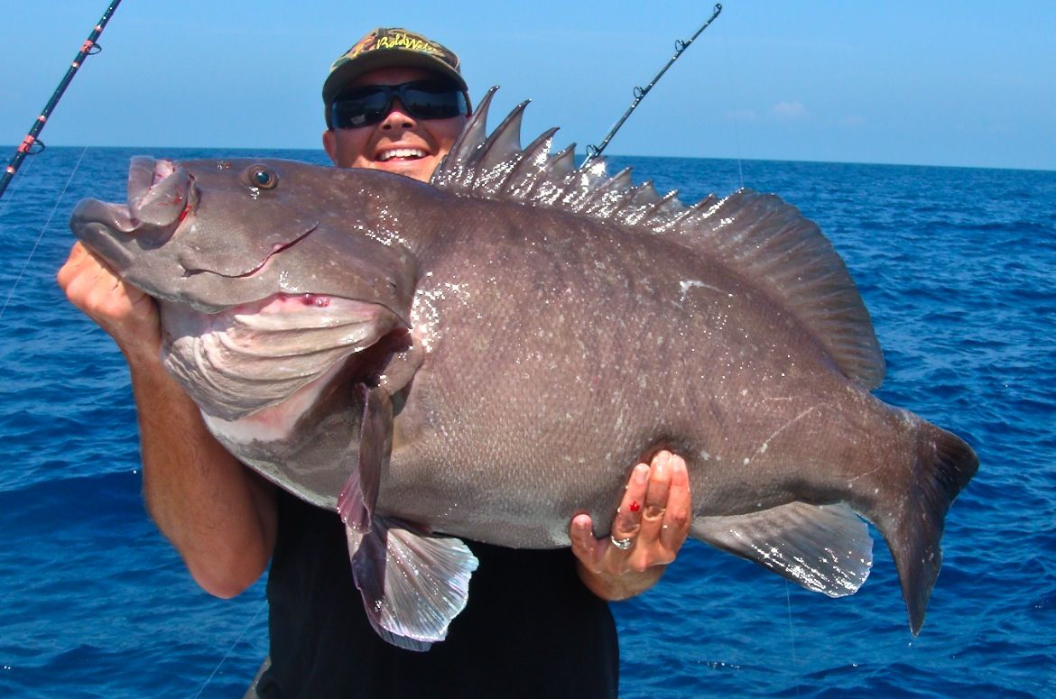 Warsaw Grouper | Fishing | Pinterest | Pesca