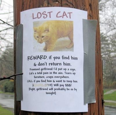 Funny Lost Cat Poster  Funny    Cat Posters