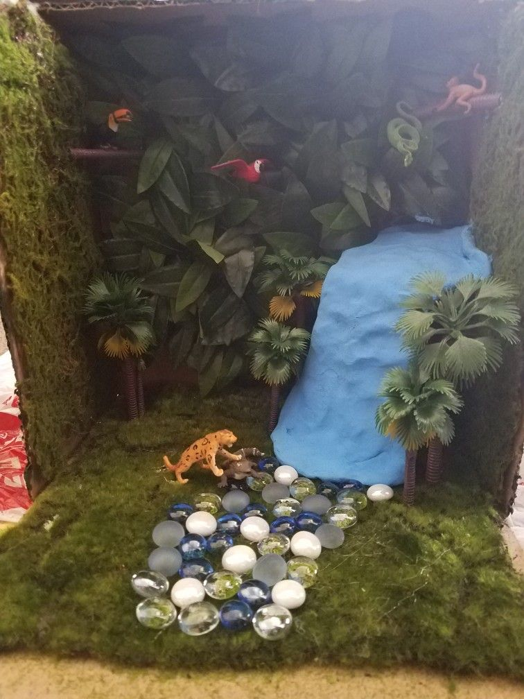 Jaguar habitat diorama | Jaguar habitat, Rainforest project