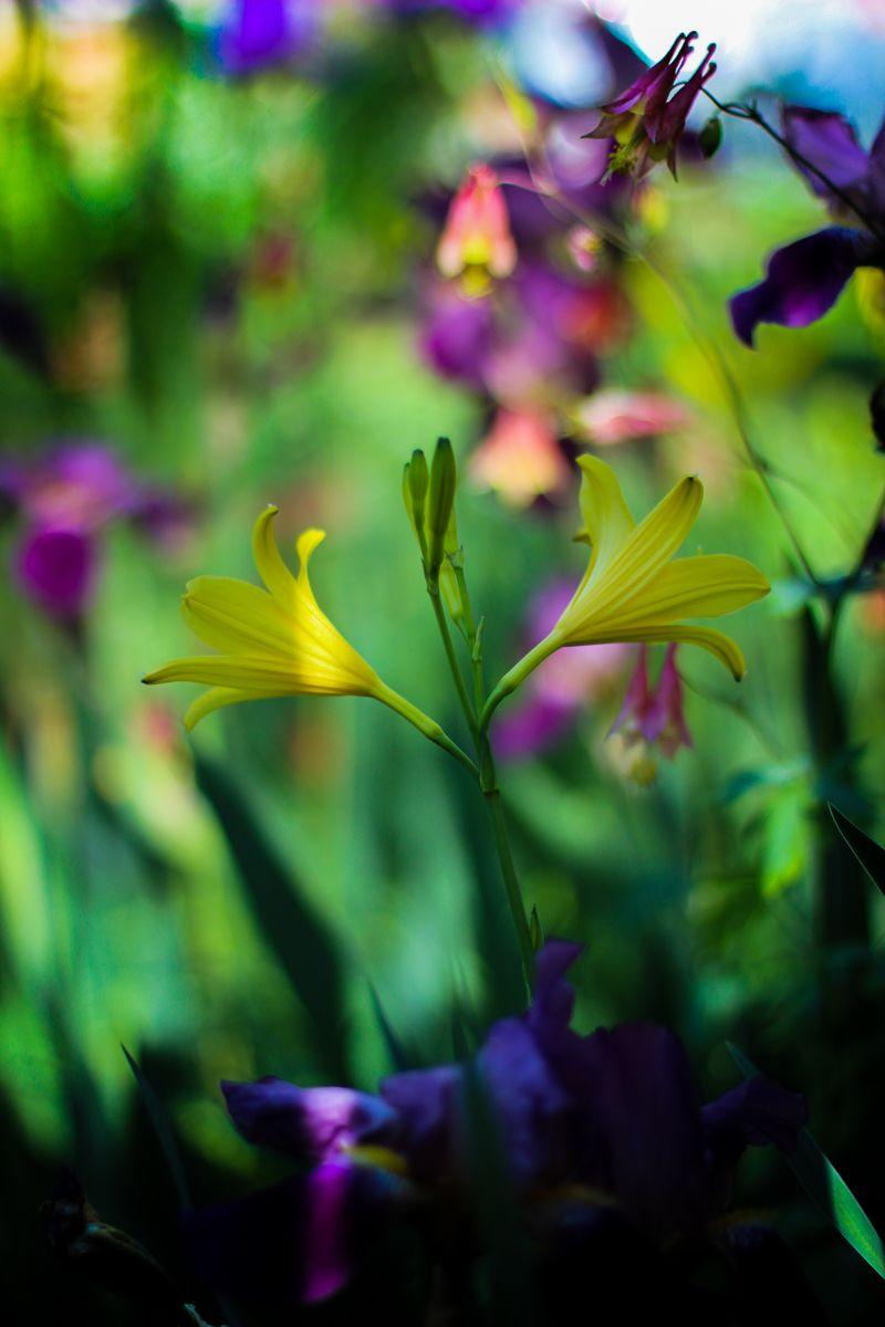 Pin by ria dekker on flowers pastel pinterest bokeh bliss