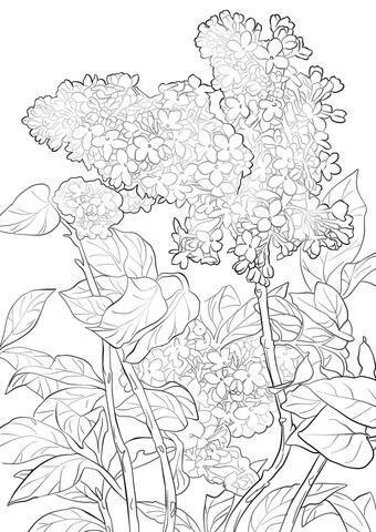 Purple Lilac Coloring Page Flower Coloring Pages Tree Coloring