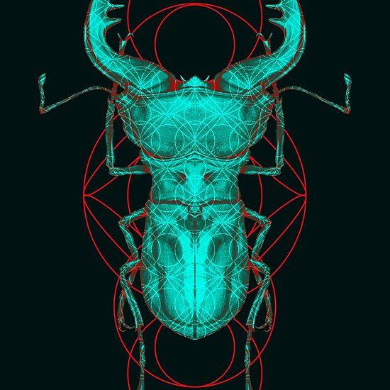 Ciclomatus Beetle