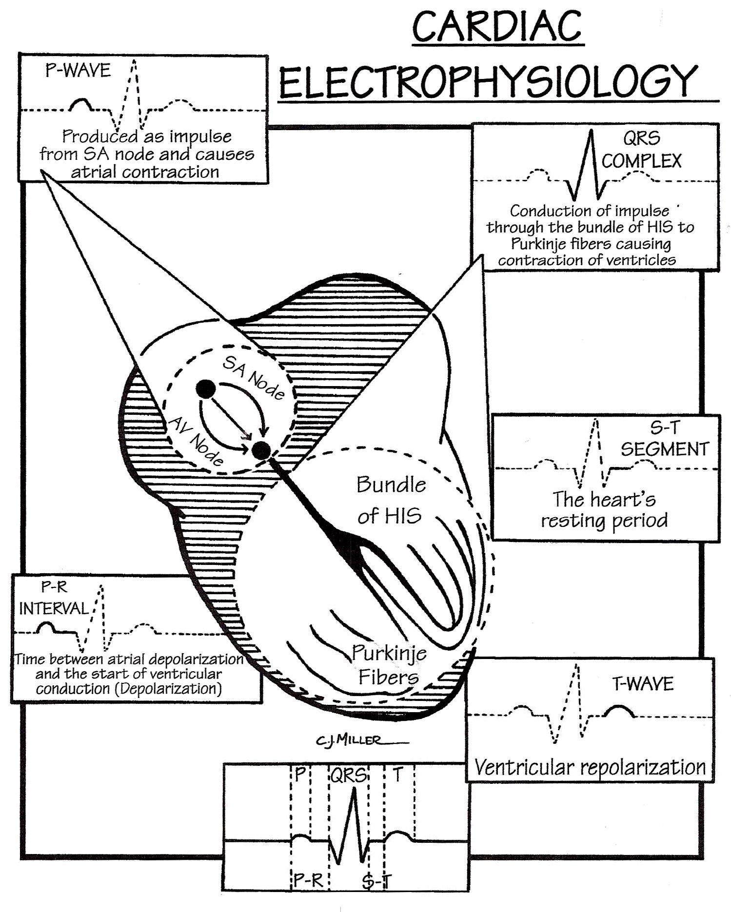 Pin by Lindsay Sara on Medical-Surgical Nursing II