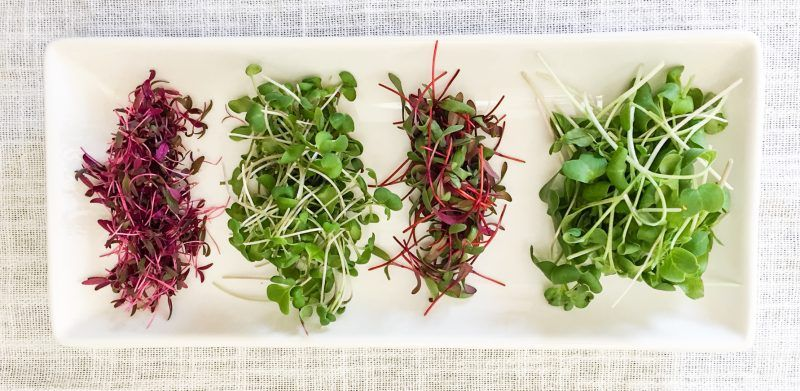How to grow microgreens (and use up your extra seeds