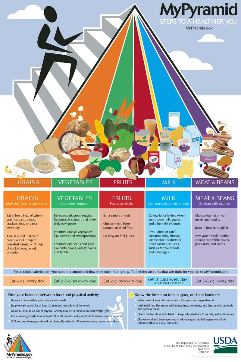 Teach Your Child About the New Food Pyramid « Teach Kids How