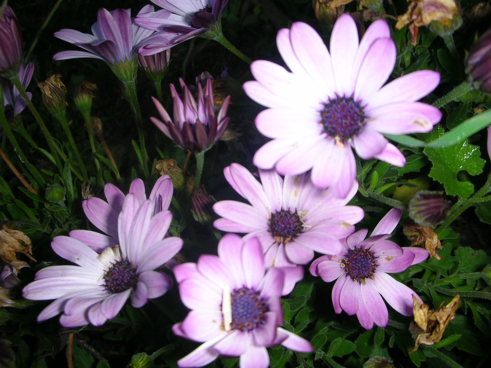 Plantas Con Flor Top 15 Flores 1001 Consejos Hibisco