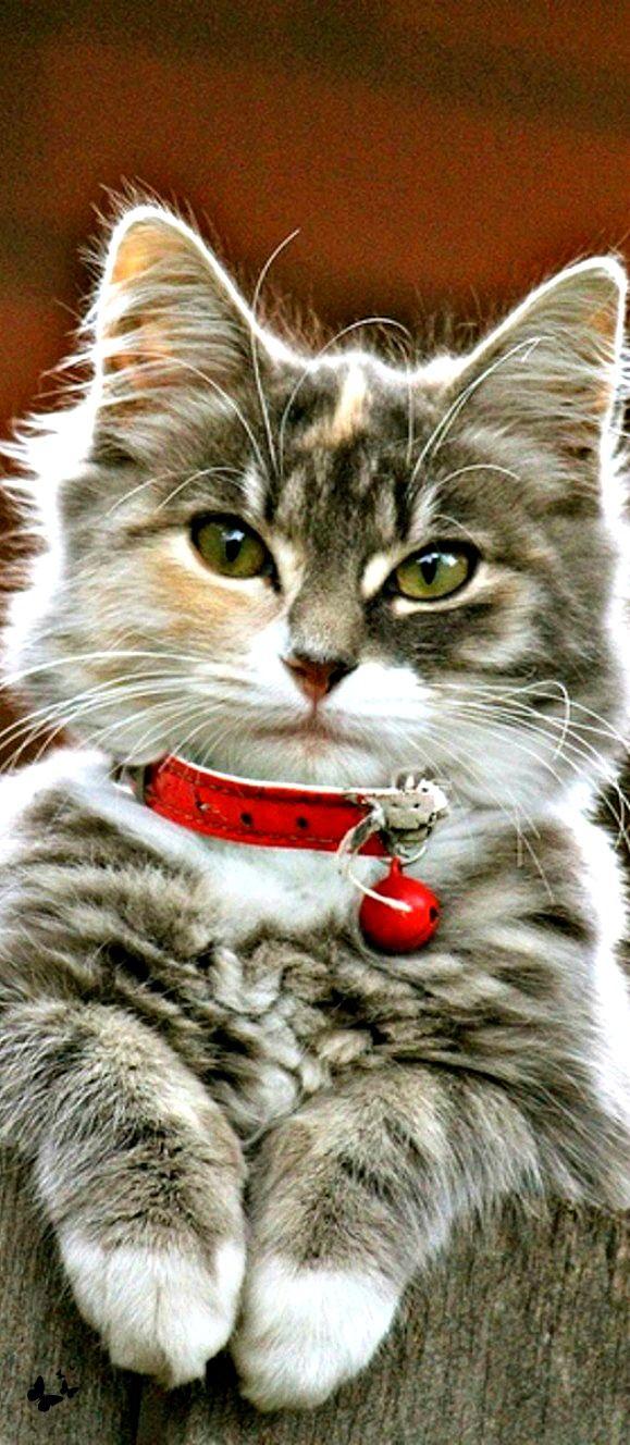 Beaute Poillue Chat Chien Chat Chat Et Bebe Chat