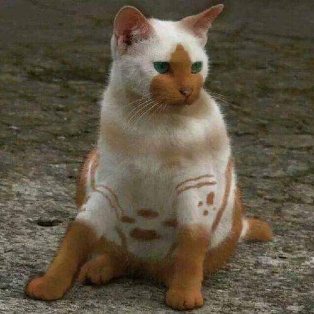 Cats Kittens Felines On Instagram Look At This Unique Little Guy Have You Ever Seen A Cat Like This Follo In 2020 Cute Animals Pretty Cats Cats And
