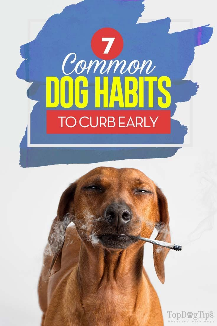 7 Common Dog Habits to Curb Early Dogs, Training your