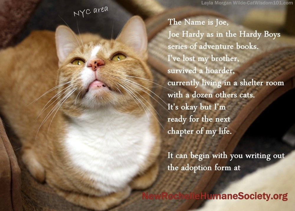 The Poetry Of Shelter Cats Cat Shelter Cat Nyc Cats