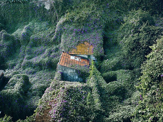 The Green Rooftop That Ate The Village Vertical Gardens