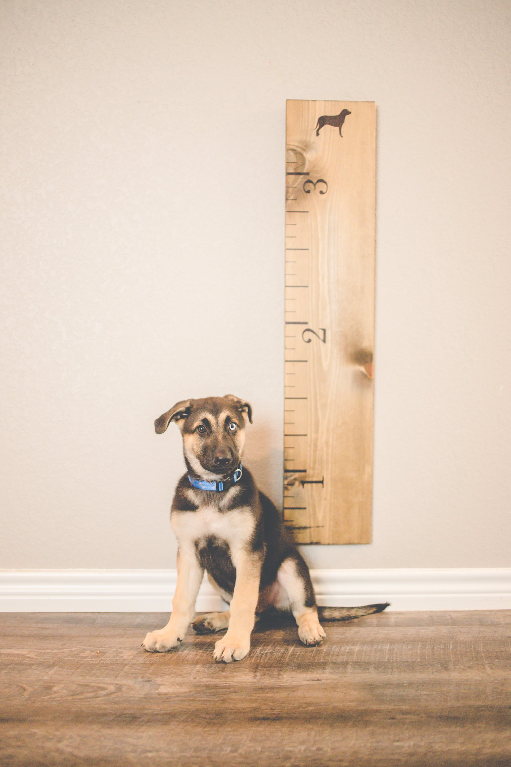 Wooden Growth Chart For Dogs Products Pinterest Growth Charts