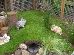 afbeeldingsresultaat voor konijn buis ik tuin pinterest kaninchen hase und hasenstall. Black Bedroom Furniture Sets. Home Design Ideas