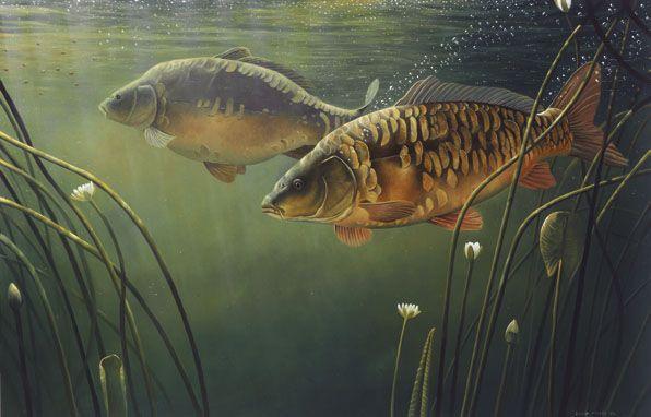 MIRROR CARP FISH PAINTING FISHING ART REAL CANVAS PRINT
