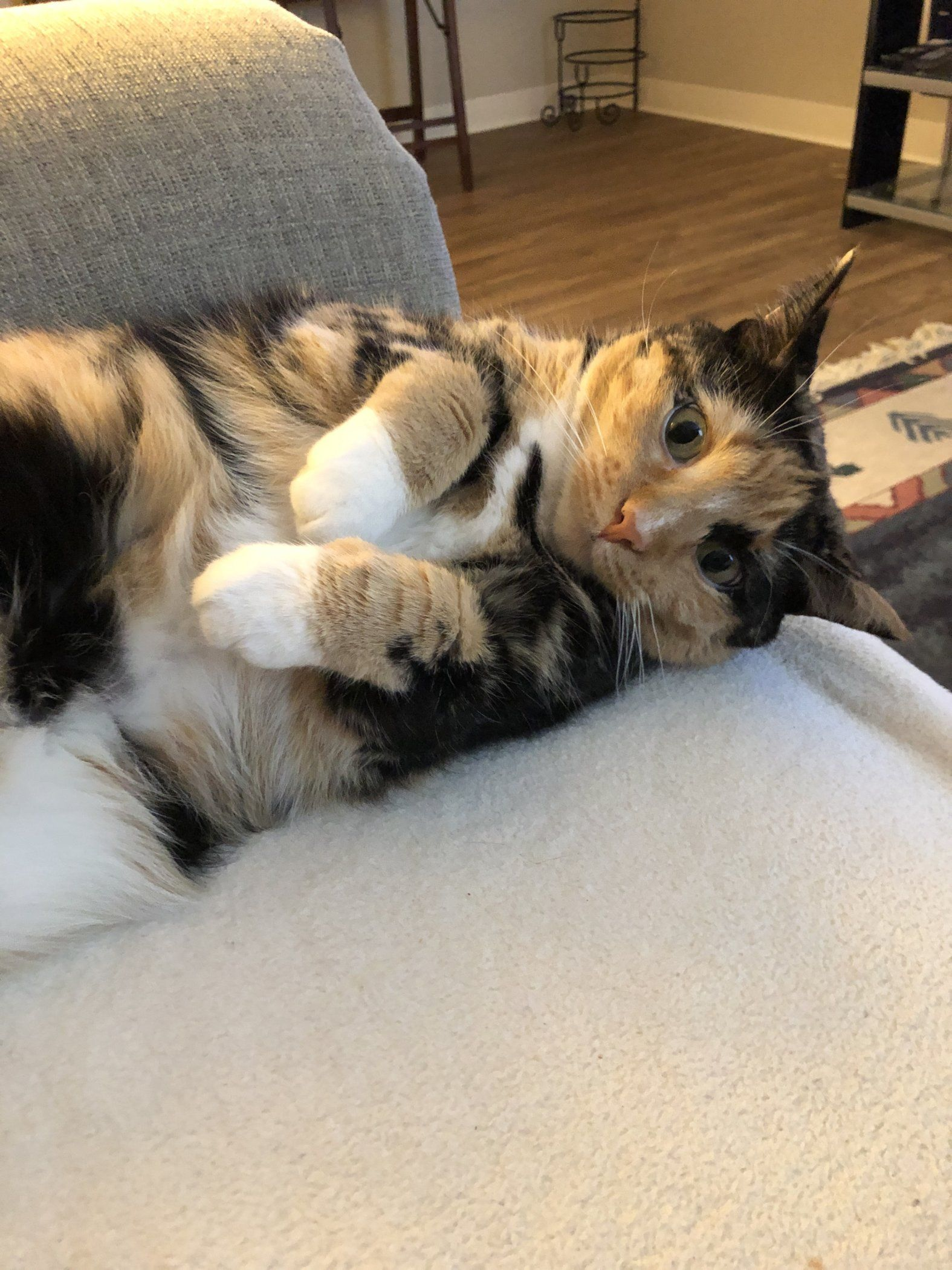 Happy Trt Tummy Rub Tuesday Week 272 Katzenworld Cat Breath Cat Leash Happy Cat