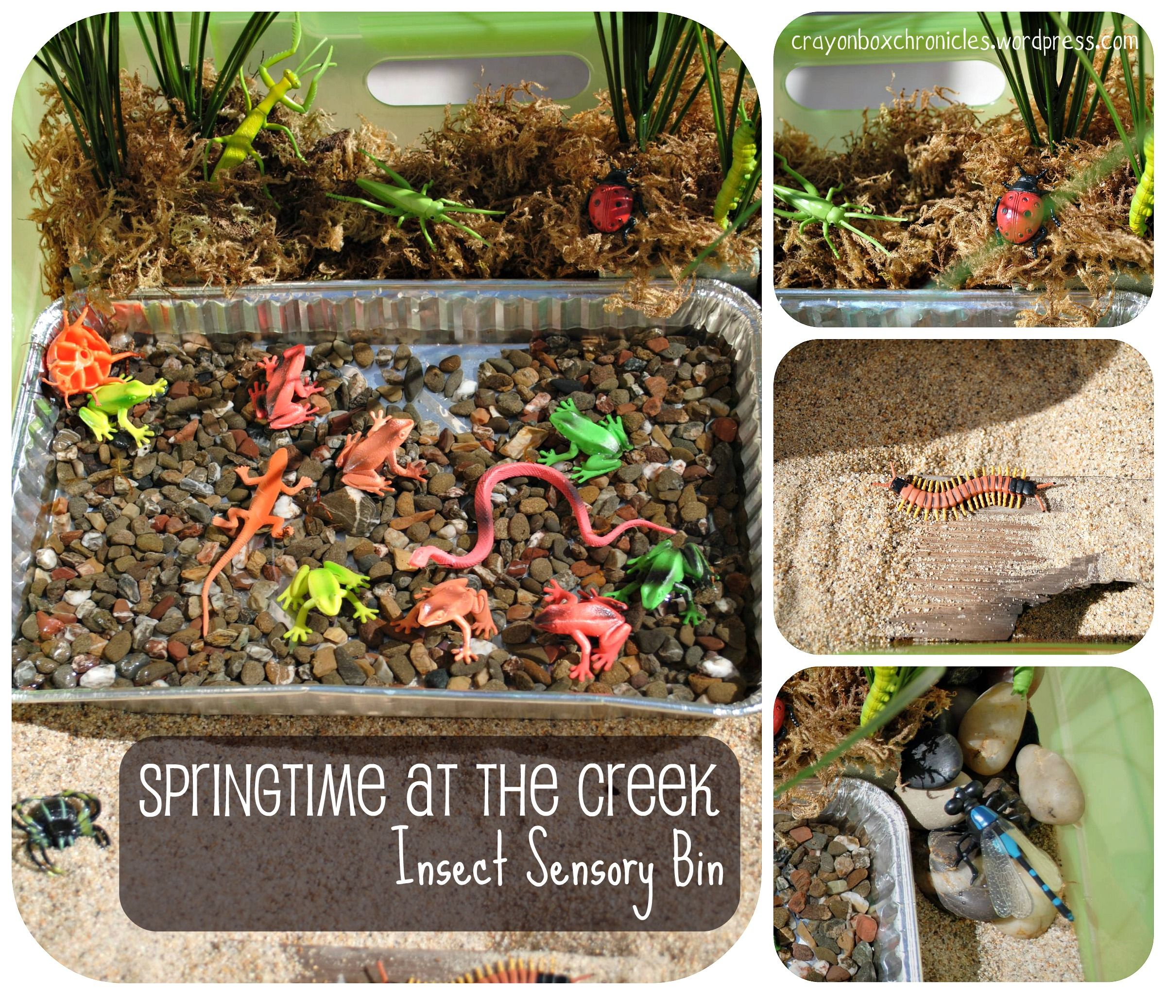Insect Sensory Bin Springtime At The Creek By Crayon Box