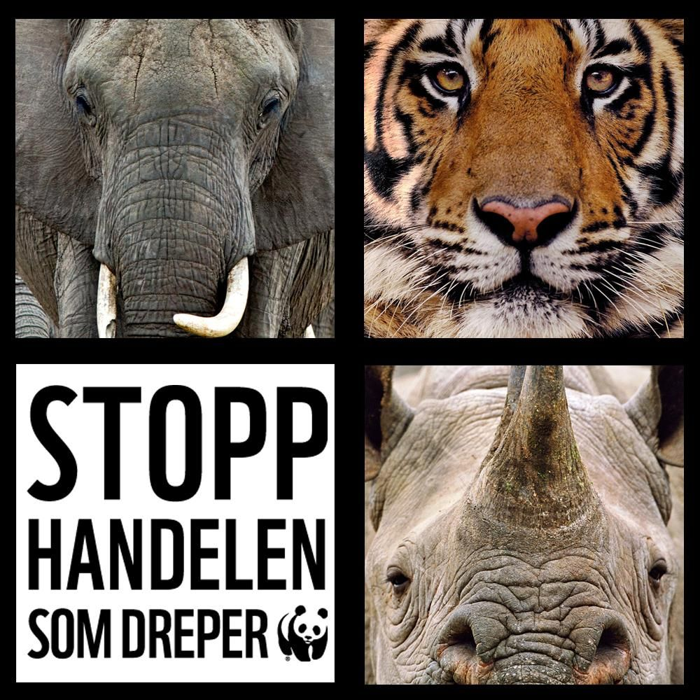 Krypskyting og illegal handel truer våre fantastiske dyr. Mener du de er #verdtåbevare? Bli http://wwf.no/fadder   #killthetrade #rhino #elephant #tiger