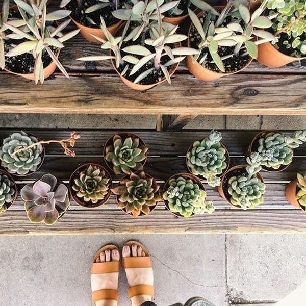 Uoonyou Urban Outfitters Little Plants Growing 400 x 300