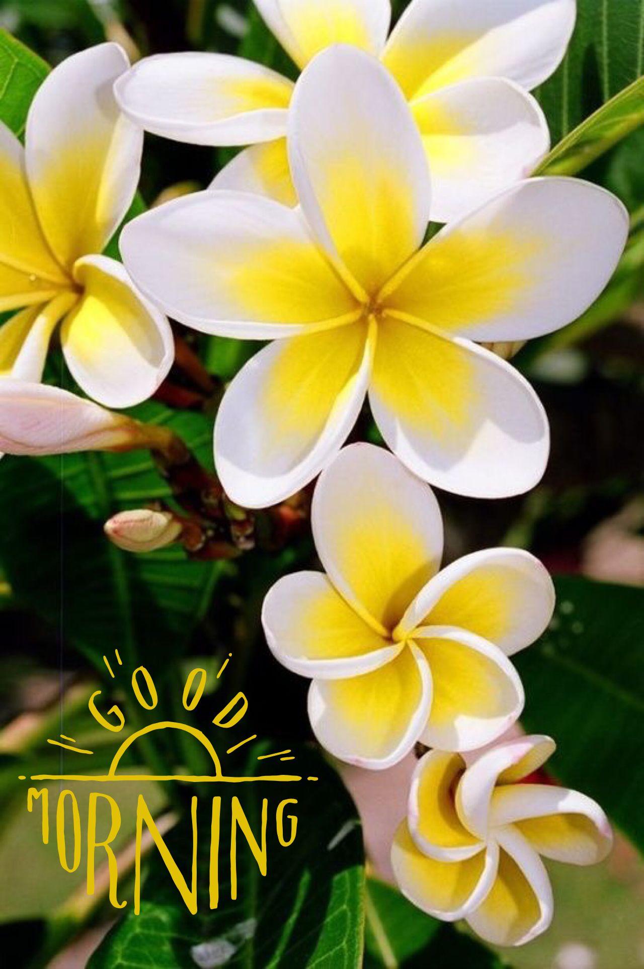 Pin By Liana Del On Flores Pinterest Flowers Australian Native