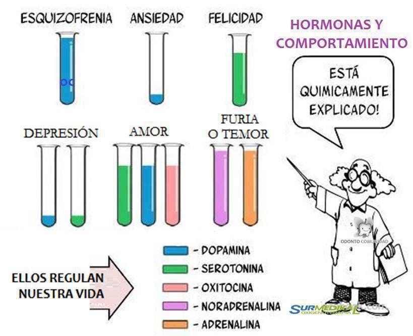 Ilustración del comportamiento hormonal..!!!!