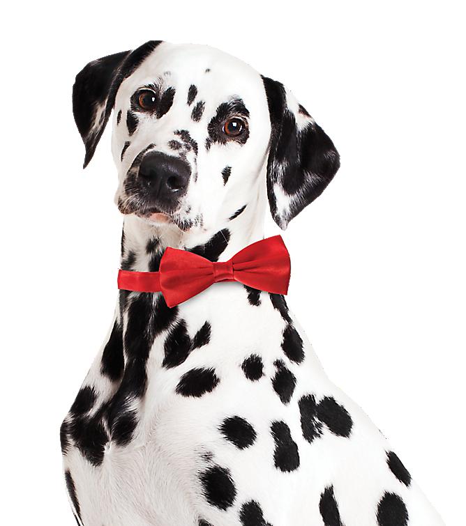 pet services coupon codes