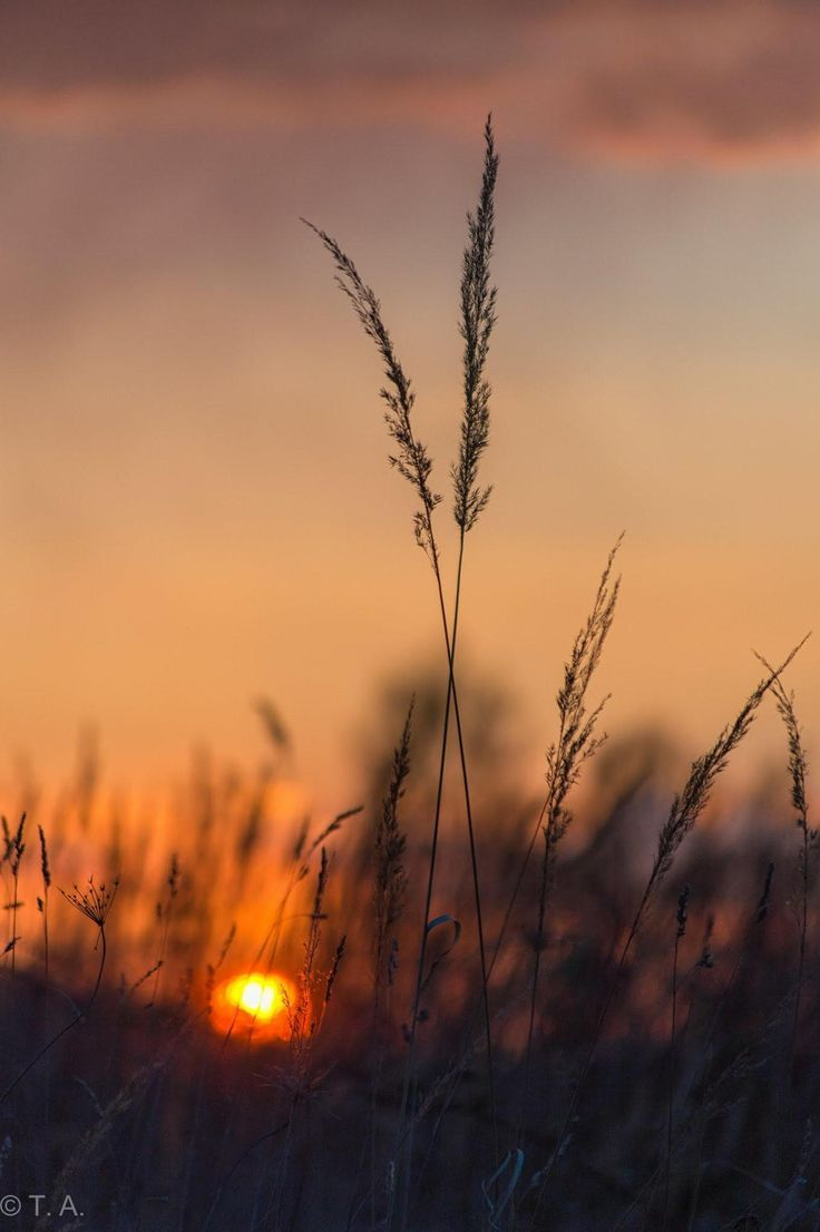 Photo of solnedgang / Stay with me – tumblr – #Stay #Sunset #Tumblr