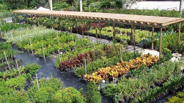 El Chino Nursery Miami Fl Plant Pic