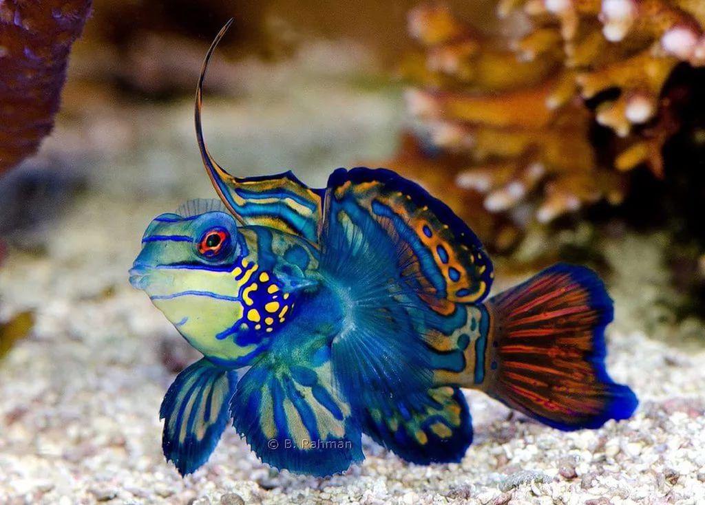 красивые морские рыбы: 21 тыс изображений найдено в Яндекс.Картинках