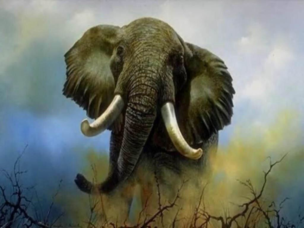 Elefante Africano | Animales | Pinterest | Elefante africano ...