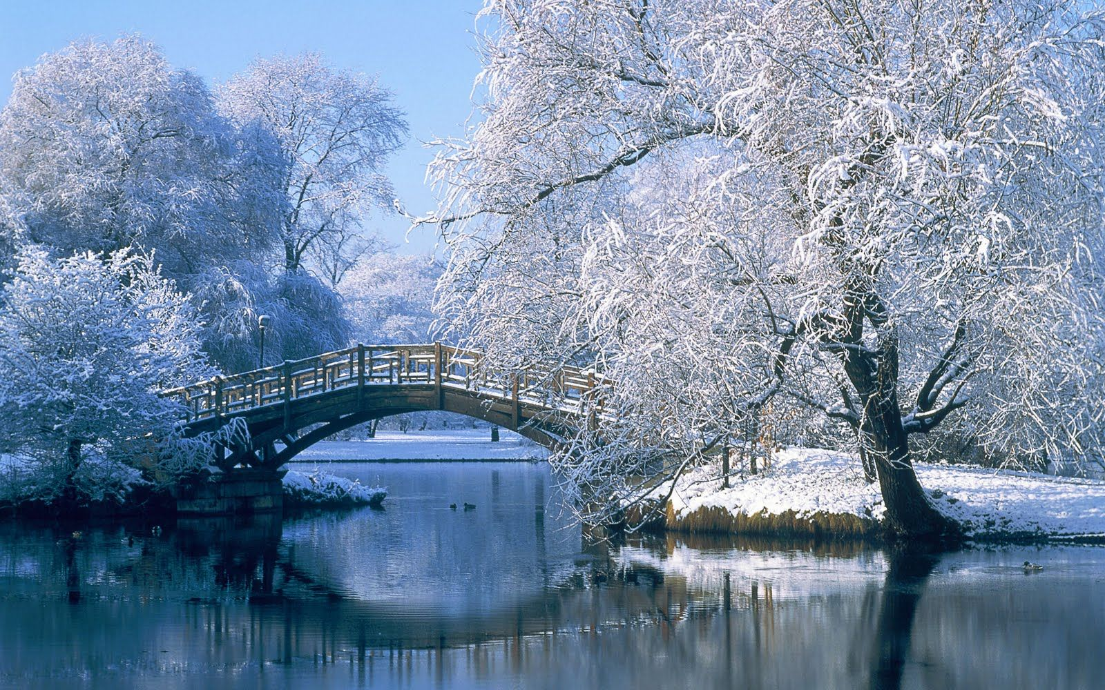 Winter Wonderland Desktop Background Winter scenery