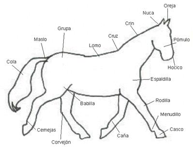 Tatuajes Muslo 958394066103 further T105 Dibujos De Caballos Para ...