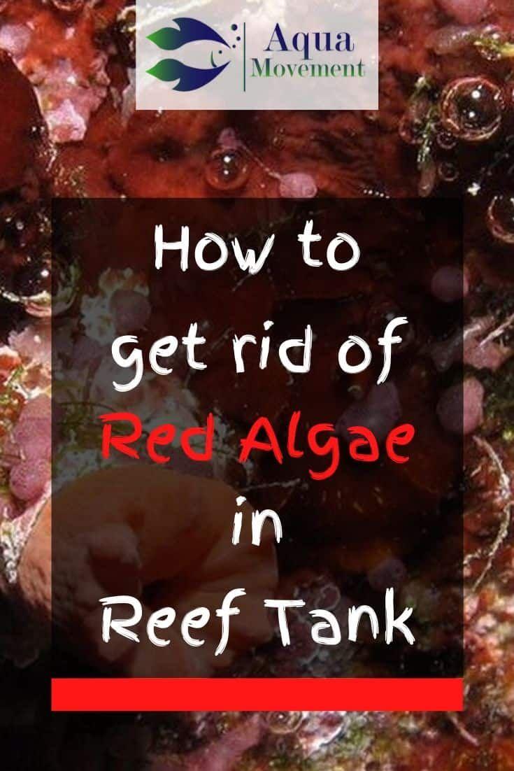 How To Get Rid Of Red Algae In Saltwater Tank   Aqua ...
