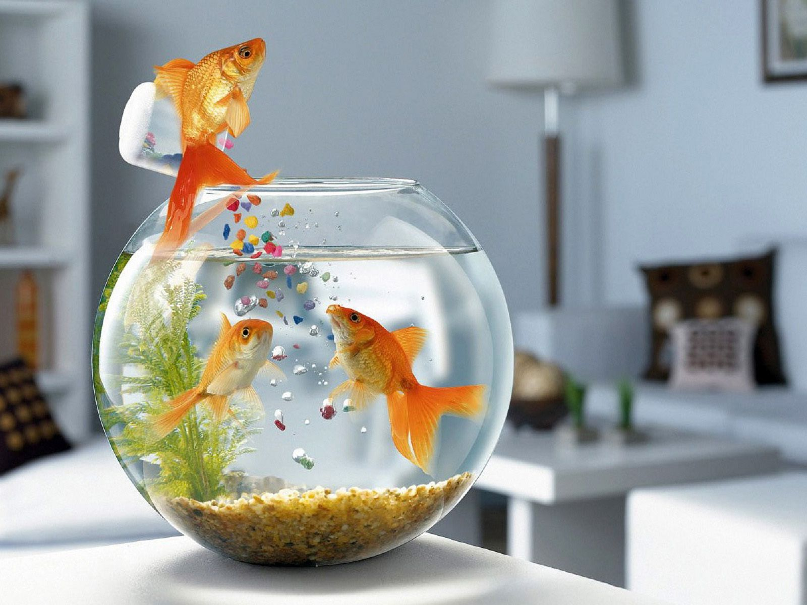 Feeding Time Cool Wallpaper Fish Wallpaper Funny Wallpaper Pictures