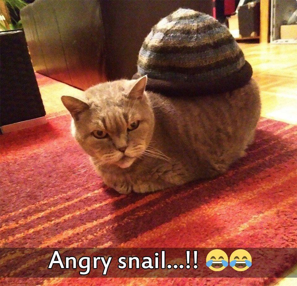 Cats Of Instagram Cats Of World Instagram Posts Videos Stories On Poshinsta Com Funny Cat Pictures Funny Animal Memes Funny Animal Pictures