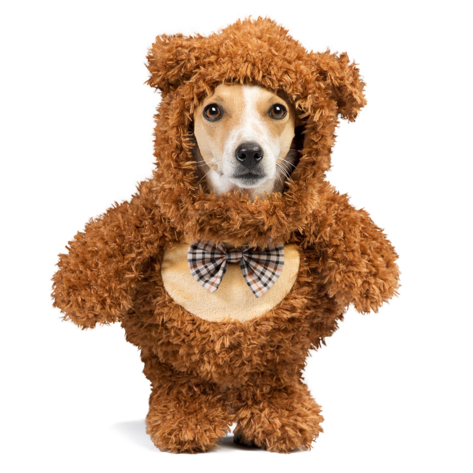 Thrills And Chills Halloween Teddy Bear Walker Pet Costume Size