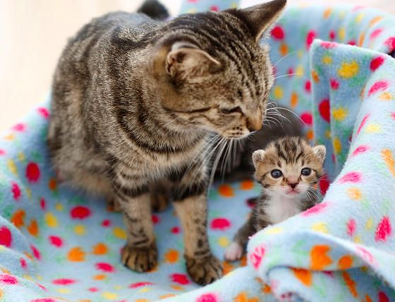 Mom Whats That But Mom Whats That Over There Mom Can I Go Outside Mom When Do We Eat Mom Mom Mom Mom Motherhood At Its Best Cats