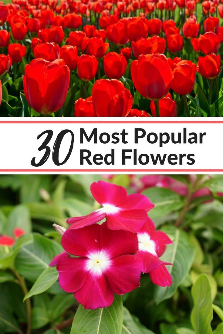 30 Most Popular Red Flowers For The Garden Our List Includes Key