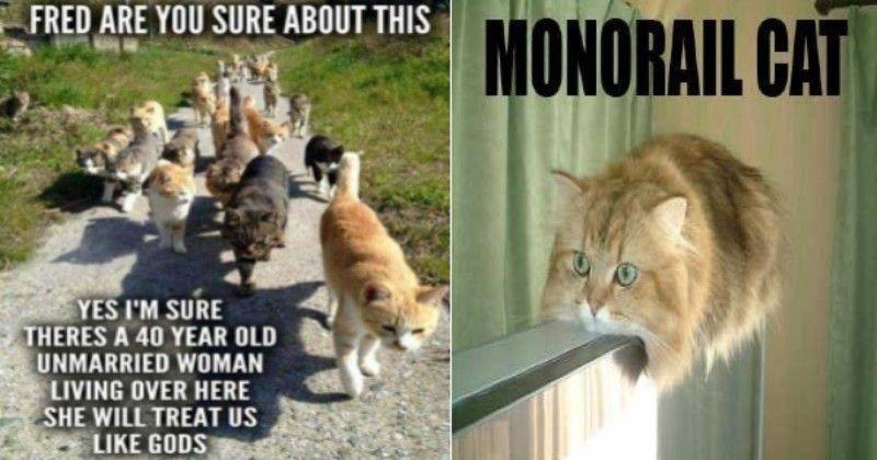 The Best Cat Meme Of The Decade 50 11 Cat Memes Cool Cats Memes