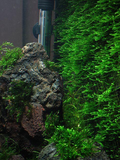 Christmas Moss Wall Aquascape Aquarium Wall Aquarium Tropical