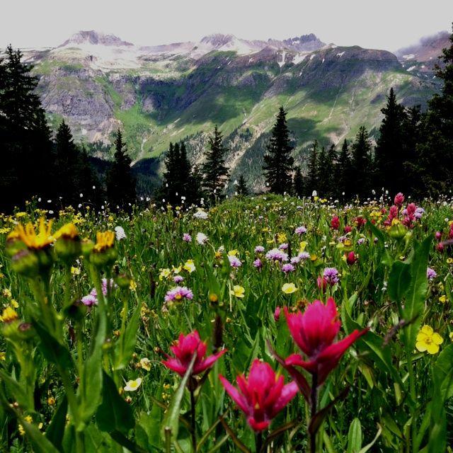 Flowersinspringinthesanjuanmountainscolorado ouray flowersinspringinthesanjuanmountainscolorado ouray longing for the mountains the spring flowers mightylinksfo