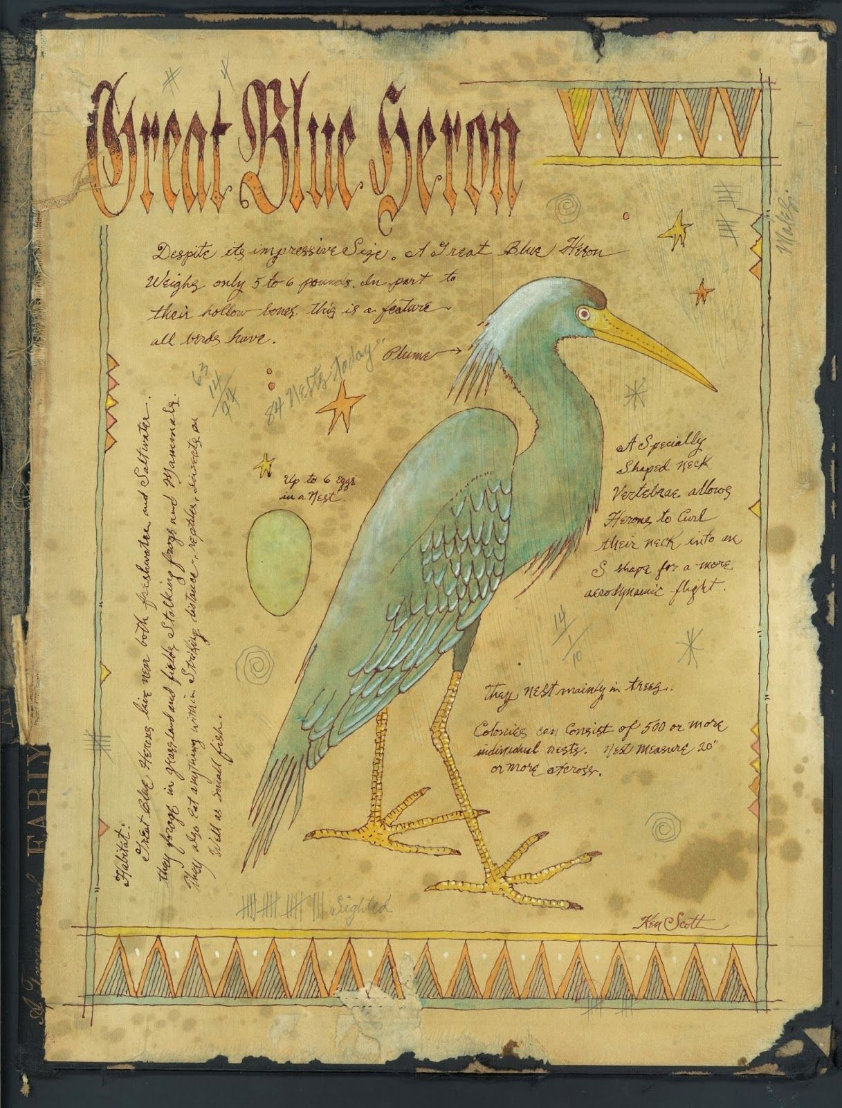 Book Cover Watercolor Paintings : Great blue heron ken scott watercolor ink painting on the