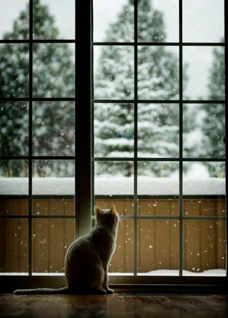 Cat in winter wonderland by Emeraldus on DeviantArt  |Winter Scenes With Cats