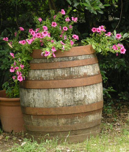 Old Barrel...filled with blooming plants.