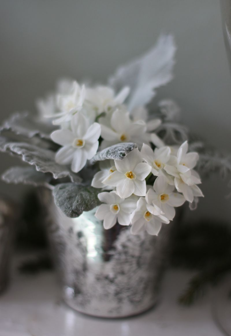 White African Violet Silver Pail Potted Plants Pinterest