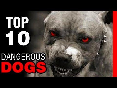 10 MOST DANGEROUS DOGS...