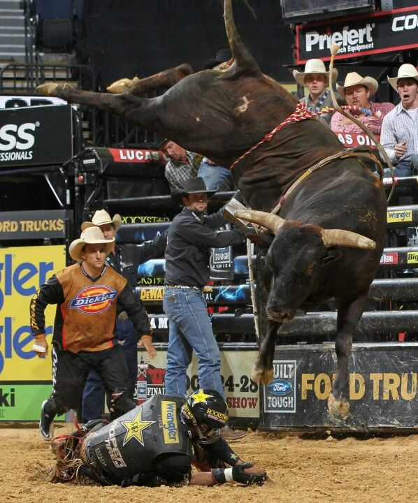 Asteroid | This might hurt | Bucking bulls, Professional ...