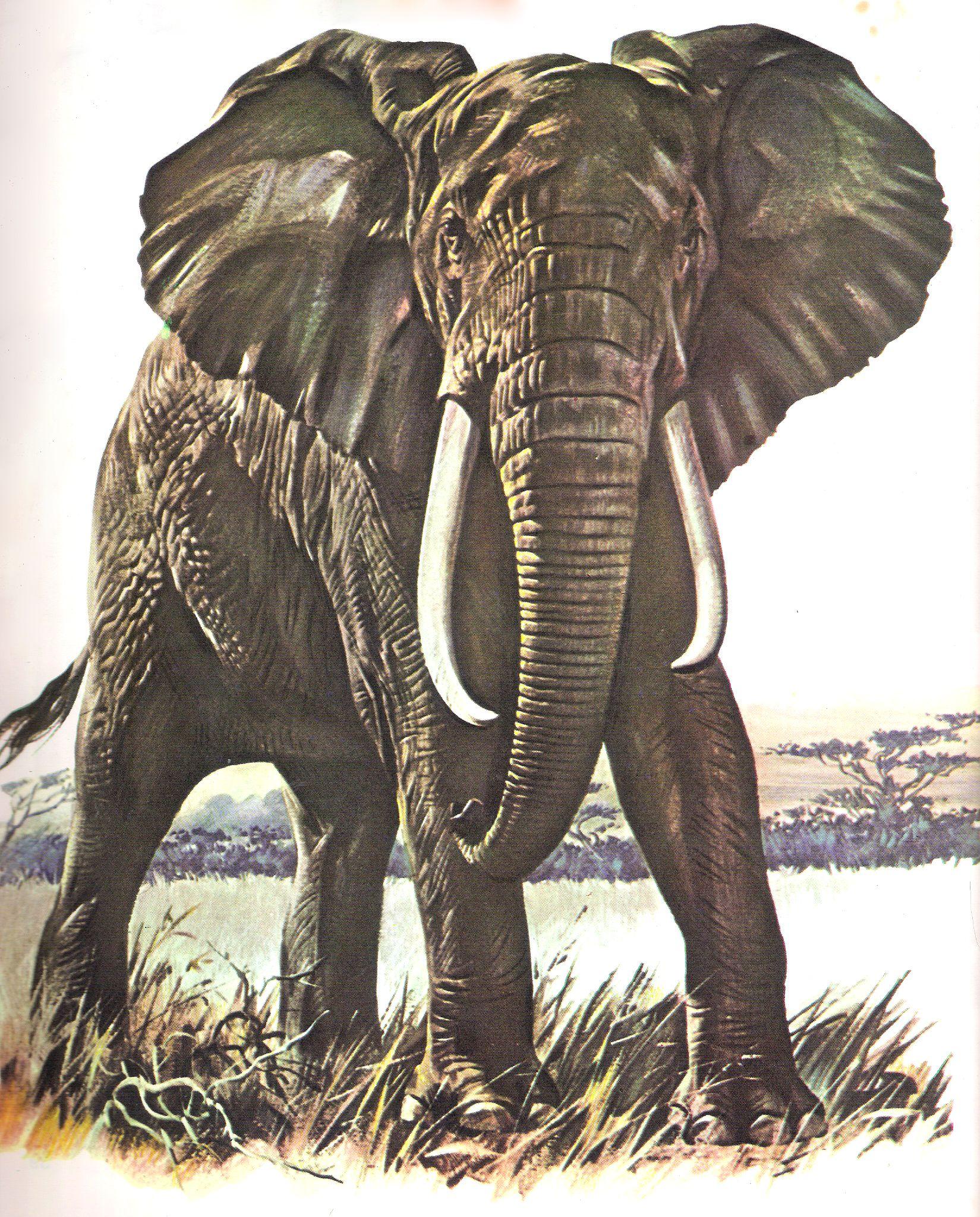 Enciclopédia Os Bichos - Editora Abril Cultural (1970) - Elefante ...