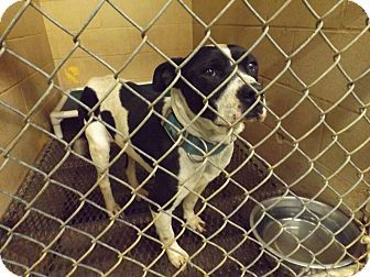 Pin By Jm Volineer On Dogs Are Love Dogs Pets Rome Georgia