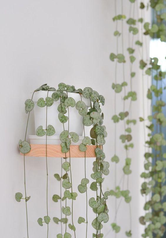 15 + Schöne Hängepflanzen Ideen #pflanzenimschlafzimmer