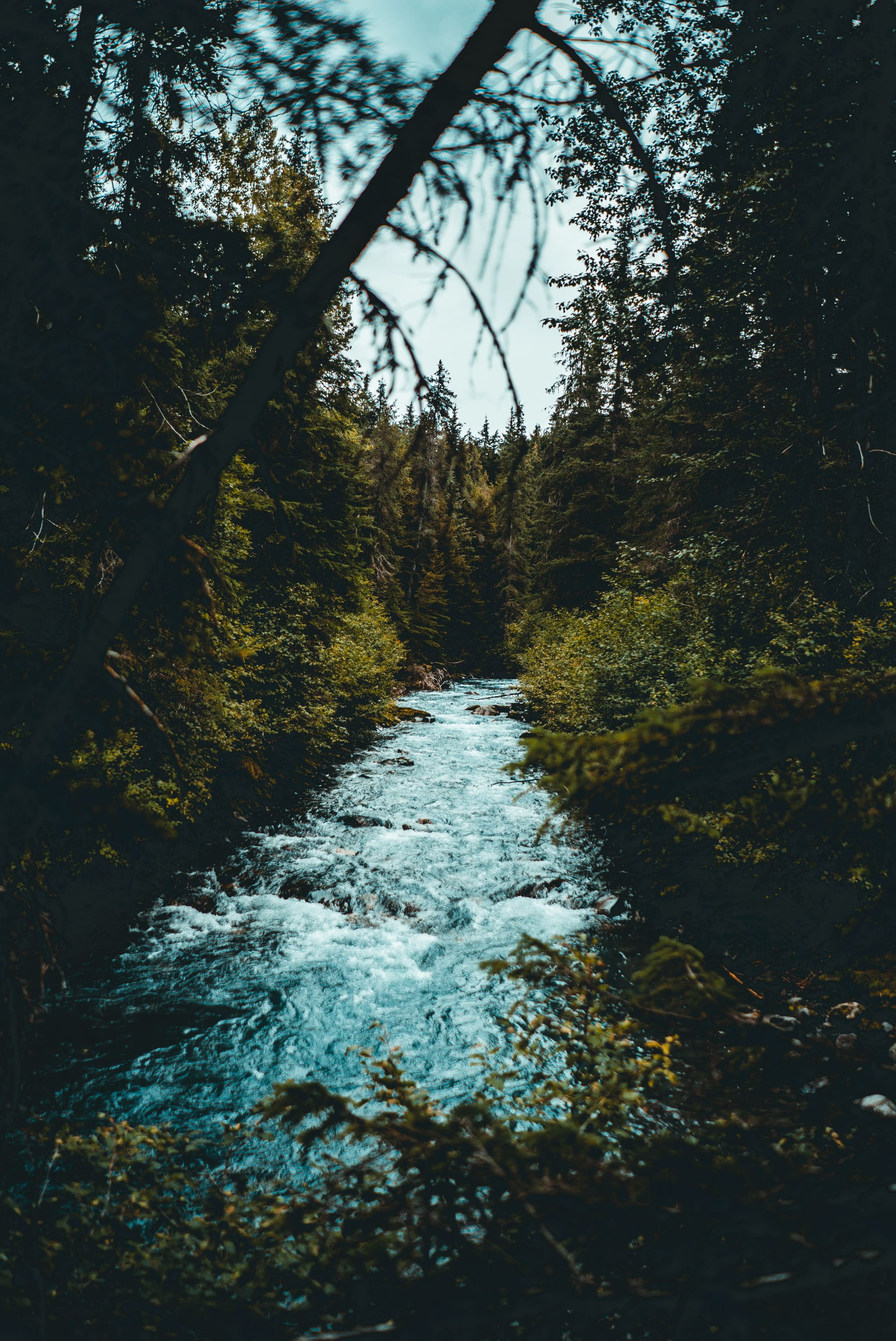 Top 30 Things To Do In Alaska The Usa Updated 2021 Forest Wallpaper Iphone Landscape Nature